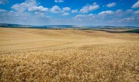 Moravian Toscana Kyjov Foto de archivo libre de regalías