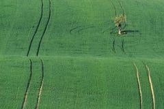 Moravian Toscanië wordt genoemd een golflandschap dichtbij Kyjov, Mo Stock Afbeeldingen