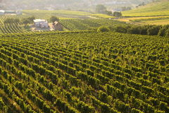 Moravian vineyard in the evening sun Royalty Free Stock Photos