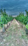 Moravian vineyard Stock Photo