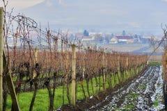 Moravian-Weinstöcke am Anfang des Winters