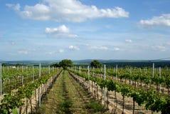 Moravian Wineyard en el resorte Foto de archivo libre de regalías