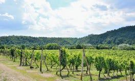 Moravianwijngaarden Sobes Stock Foto's