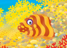 Moray vector illustration
