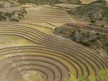 Moray, Cusco, Perù. Immagini Stock