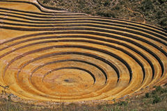 Moray Cusco, Peru Arkivbild