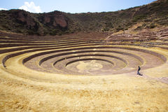 Moray, Cusco, Peru. Agricultural terraces at Moray, Cusco, Peru Royalty Free Stock Photo