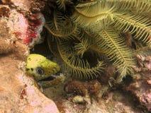 moray eel стоковое изображение