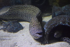Moray Eel Aquarium royalty-vrije stock afbeeldingen