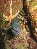 Moray Eel , starfish, and sea urchin Stock Photography