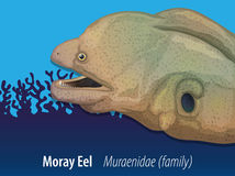 Moray eel swimming in the sea. Illustration Royalty Free Stock Photos
