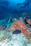 Moray Eel in tropischer Coral Reef, Malediven Lizenzfreies Stockbild