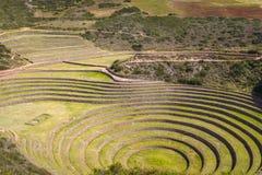 Moray Inca fördärvar i Peru arkivfoto