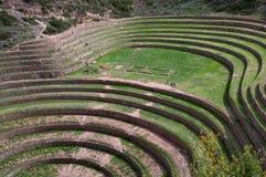 Moray - Landwirtschaft im heiligen Tal Stockbild