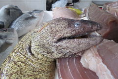 Moray moray eel, Murane. From Adriatic sea at the fish market in Bar-city, Montenegro Stock Photography