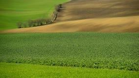 Moray Rolling Hills mit Weizen filds Lizenzfreies Stockfoto