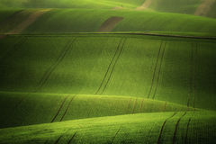 Moray Rolling Hills mit Weizen filds Stockfotografie