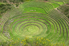 Moray Ruin in Cusco, Peru. This picture is taken in Cusco, Peru. Moray Quechua: Muray is an archaeological site in Peru approximately 50 kilometres northwest of Stock Photos