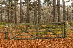 Moray's winter gate. Royalty Free Stock Images