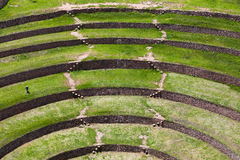 Moray Terraces Stock Images