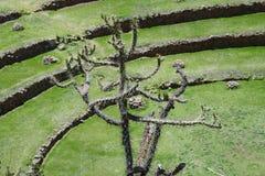 Moray, valle sacra delle inche, Perù Immagini Stock Libere da Diritti