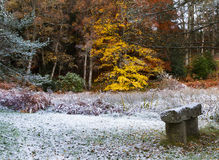 Moray Winter Garden Royalty Free Stock Photography