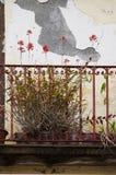 Morbid balcony with plants. Red plants on a morbid balcony Royalty Free Stock Photography