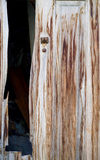 Morbid door. Relict of a morbid wooden door Royalty Free Stock Photo