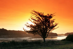 Morbihan coast. In Brittany country Stock Images