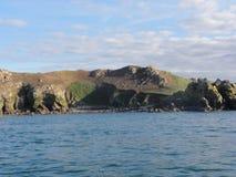 Morbihan - das Ile Zusatz-Oiseaux stockfoto
