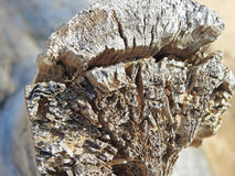 Morceau d'un vieil arbre sur la plage Image stock