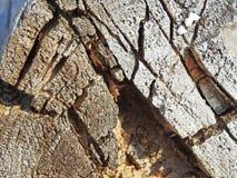 Morceau d'un vieil arbre sur la plage Image libre de droits