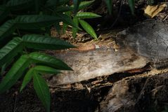 Morceau de bois dans la forêt photo libre de droits