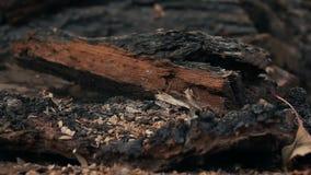 Morceau de bois en baisse banque de vidéos