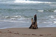 Morceau de bois de flottage sur la plage Images libres de droits