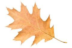 Morceau de congé d'automne se défraîchissant dans la chute Photo stock