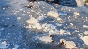 Morceau de coupures de glace sur la glace banque de vidéos