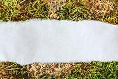 Morceau de papier en lambeaux sur la mousse Photographie stock