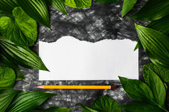 Morceau de papier propre sur un fond foncé entouré par des feuilles, Photos libres de droits