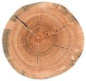 Morceau de section transversale en bois circulaire avec des fissures et des anneaux de croissance d'arbre Texture de tranche de c images stock