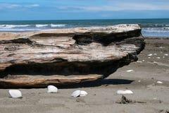 Morceau et coquilles de bois de construction sur une plage Photo stock