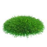 Morceau rond d'herbe cultivée à installer Photos libres de droits