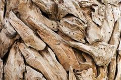 Morceaux de bois sec par ornamental Photographie stock libre de droits