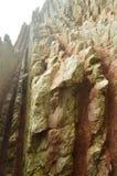 Morceaux de mur rose de grès composé de disques de fossile avec des formations du type de flysch du basque paléocène de l'UNESCO  Photos libres de droits