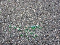 Morceaux de verre vert cassé sur un asphalte Photos stock