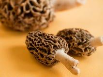Morchel-Pilze Stockfotografie