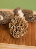 Morchel-Pilze Stockbilder