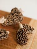 Morchel-Pilze Lizenzfreies Stockbild