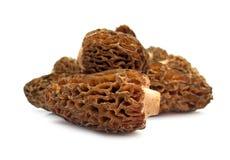 Morchella do cogumelo do Morel Fotos de Stock