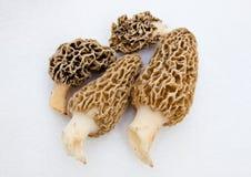 morchella morchel schwamm pilze stockbild bild von nahrung morcheln 44508373. Black Bedroom Furniture Sets. Home Design Ideas